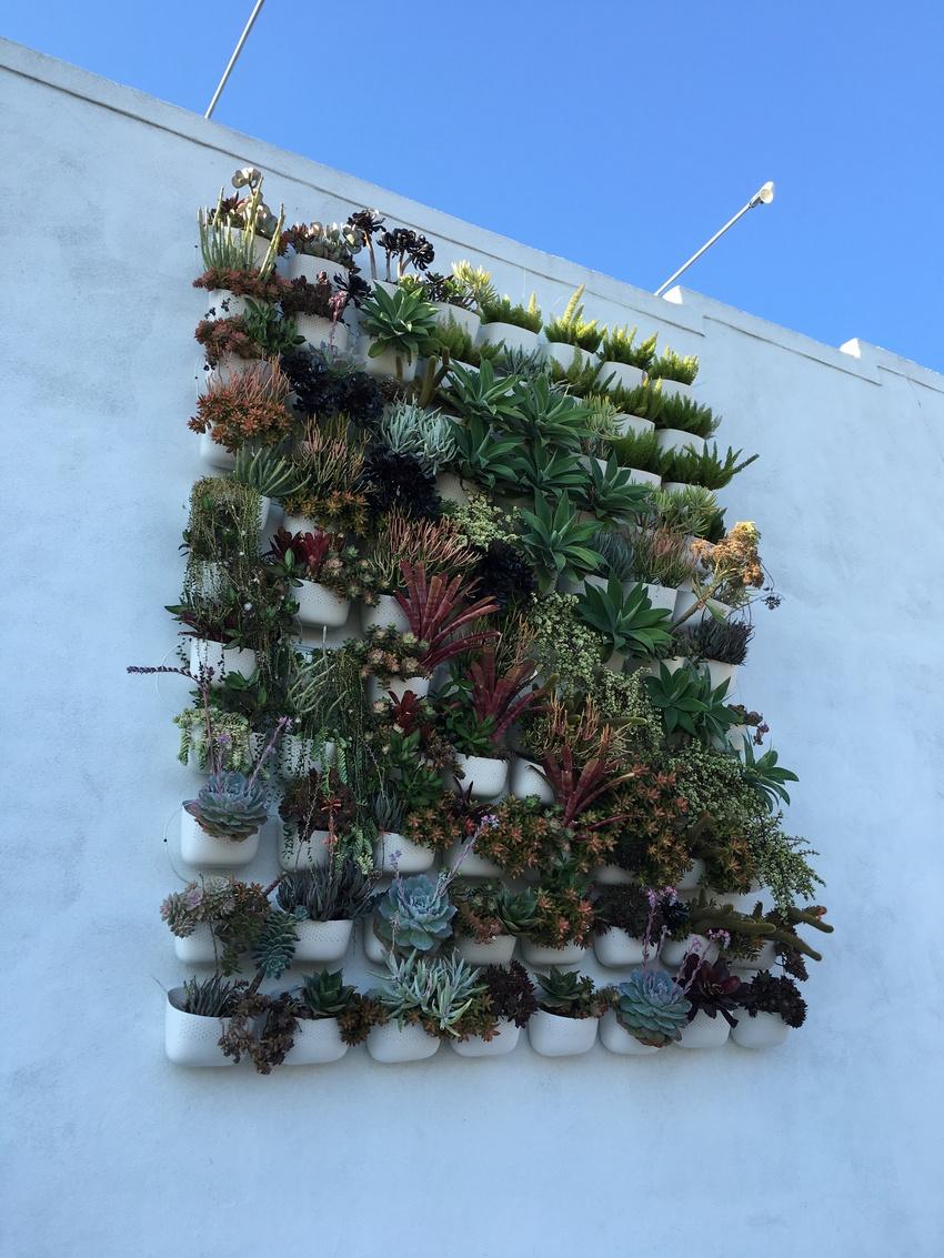 壁にかかっている多肉植物がかわ...