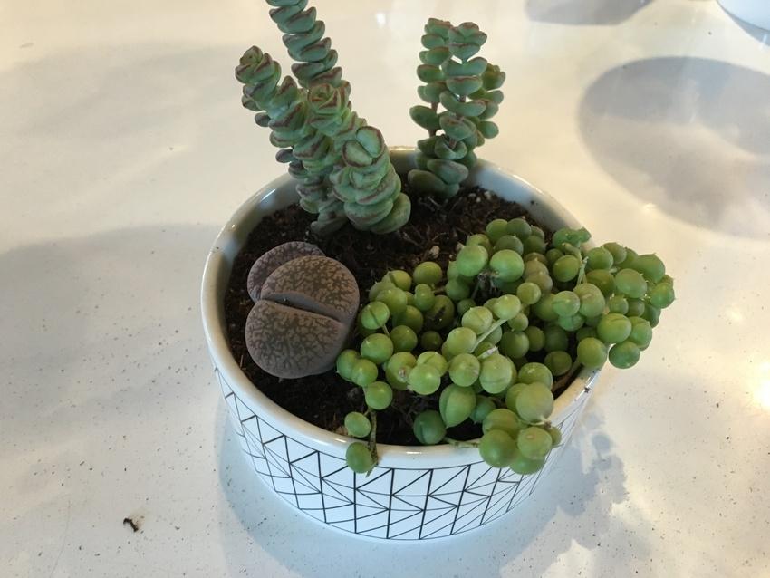 (4) 植物を配置しながら植え...