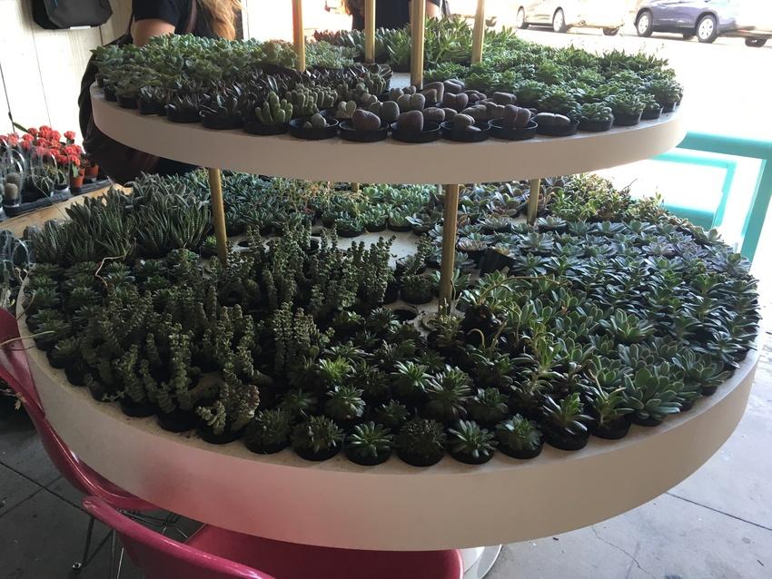 (1) 寄せ植えしたい植物と、...
