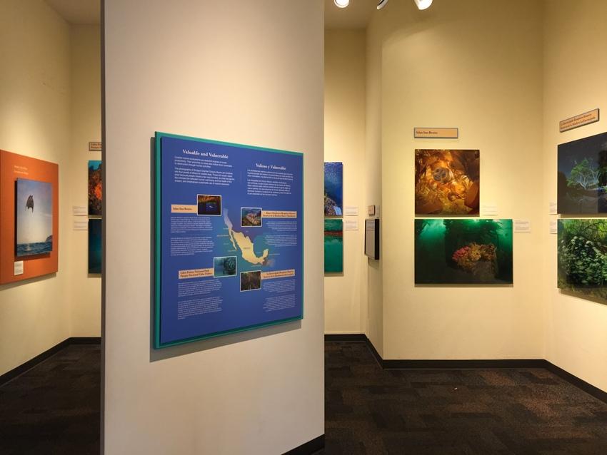 海洋生物展覧スペース