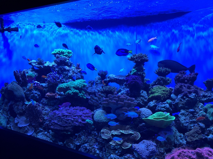 色鮮やかなきれいな熱帯魚も