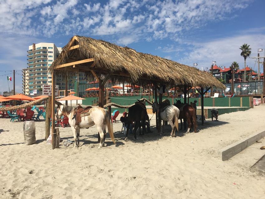 ビーチで乗馬もできます