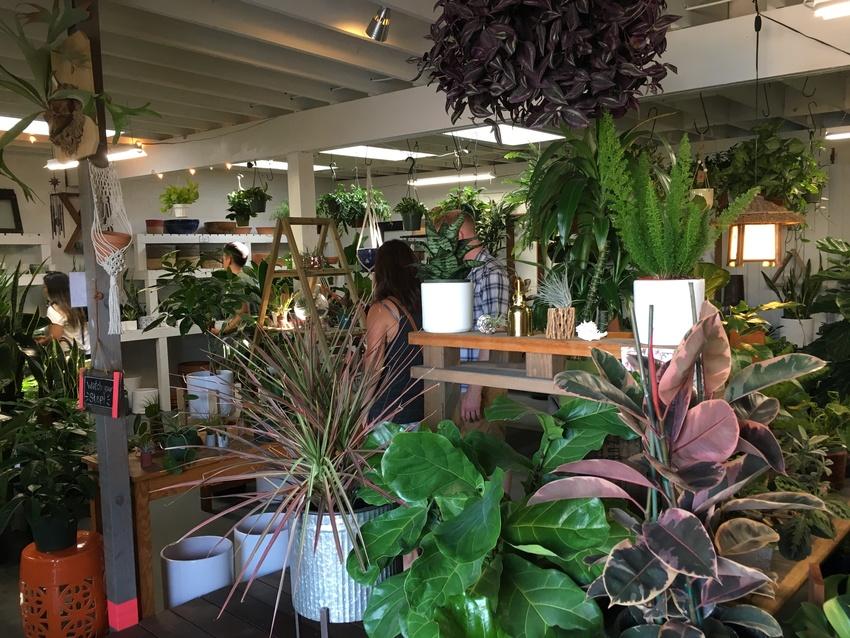 店内には観葉植物やポット、土な...
