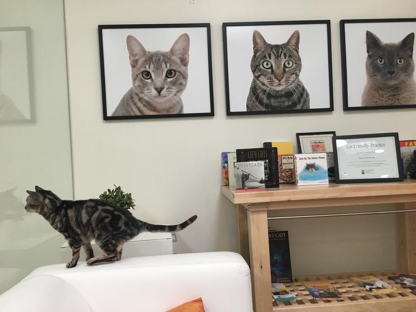 猫専用の部屋があり、猫さんはキ...