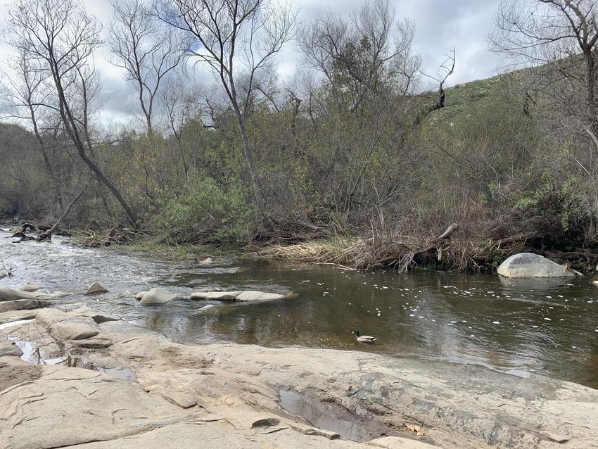 雨の後だったので川が流れていま...