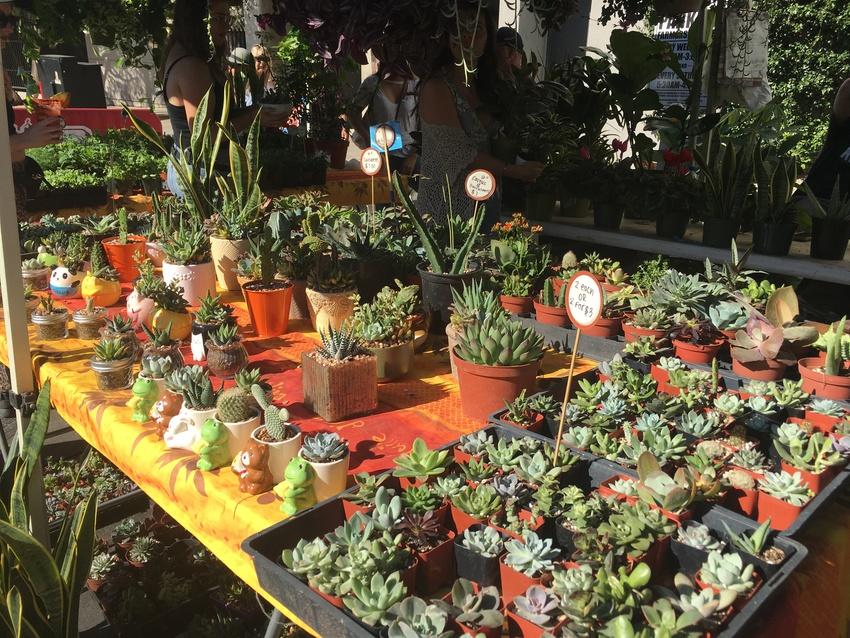可愛い植物がたくさん!