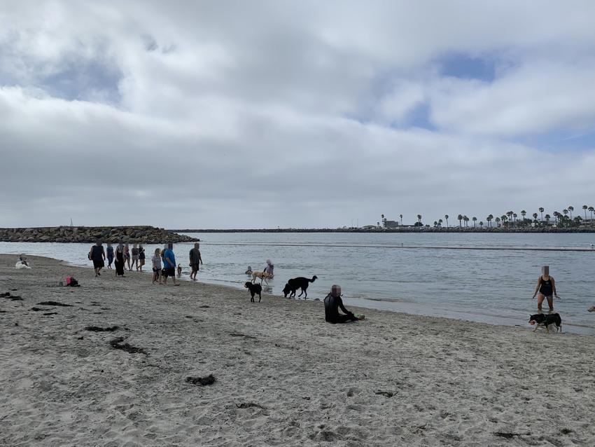サンディエゴ:OB Dog B...