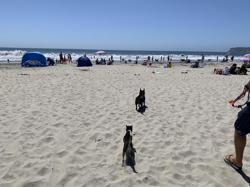砂浜にはたくさんのワンちゃんと...