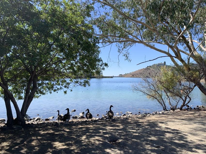 湖周辺には鴨がたくさん