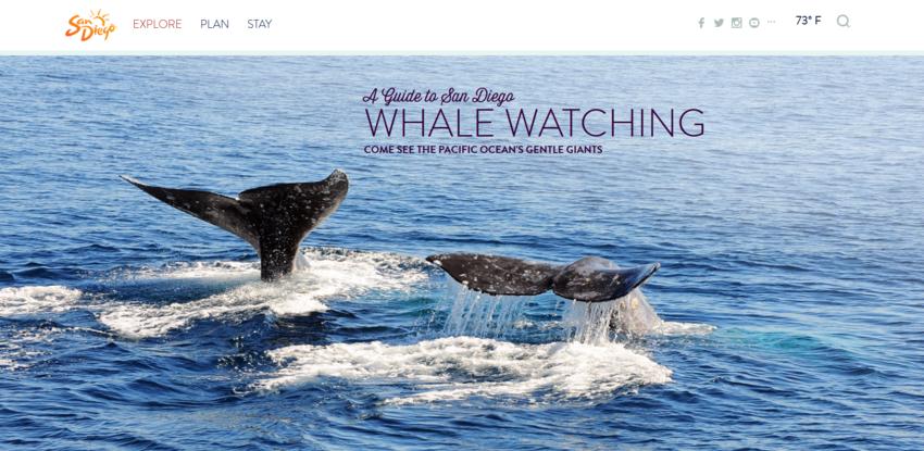 サンディエゴ:クジラがサンディ...