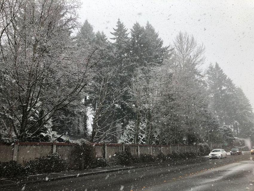 Snow ... Traffic