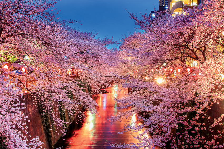 Spring has come in Japan.
