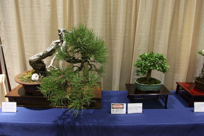 Bonsai 盆栽 and B...