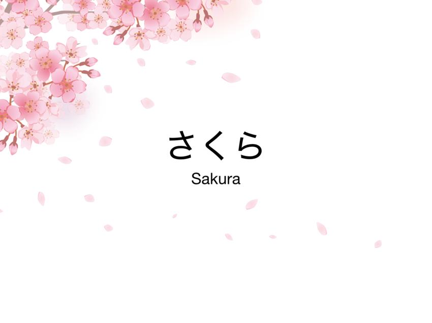 桜 さくら Sakura