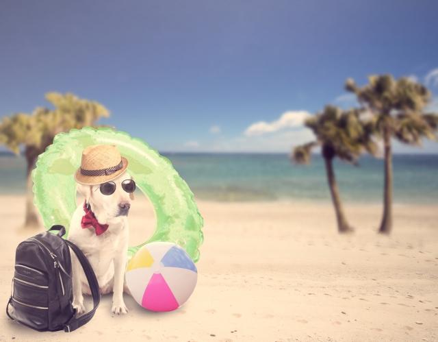 楽しい夏休みをお過ごしください