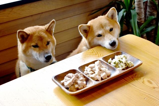 柴犬は日本で人気があります