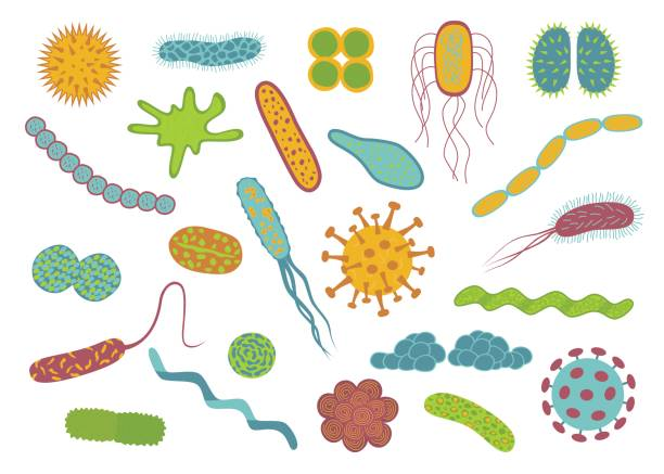 Gut bacteria strains found to p...