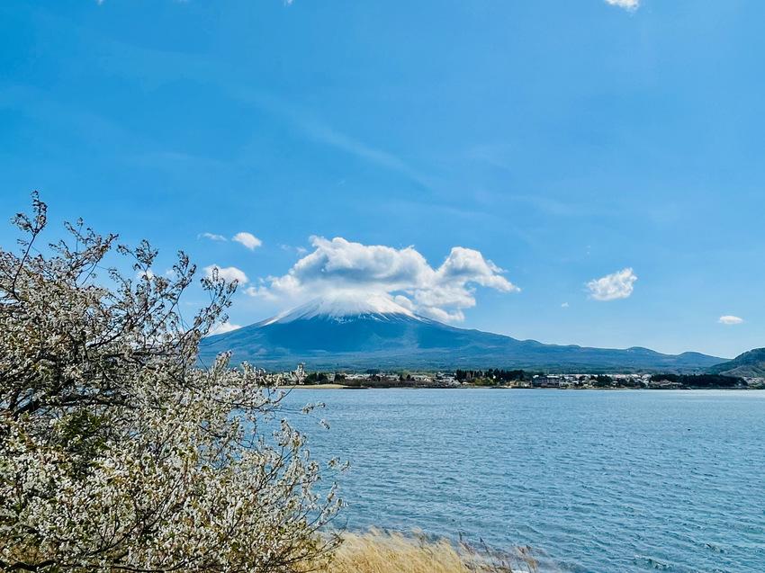 桜と富士山、美しい