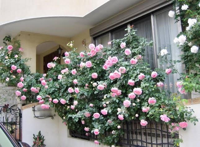 思い込みが薔薇色に変える