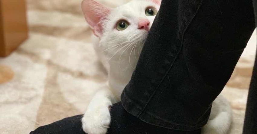 白猫による脳内ホルモンの効果☆
