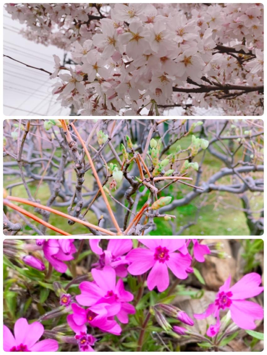 750.春、春、春、構内パトロ...
