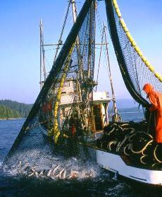 ADF&G 2013 Alaska Salmon Fo...