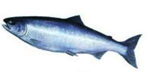 Global Sockeye Salmon Product...