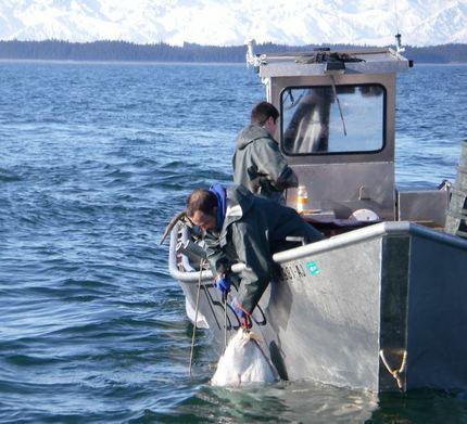 Greg Indreland,of Yakutat Seafo...