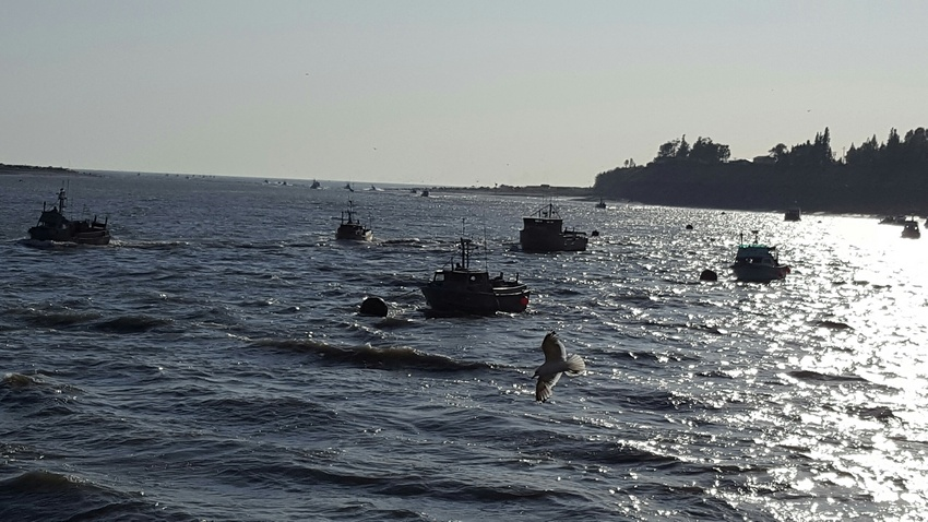 Drift net boats head in after a...