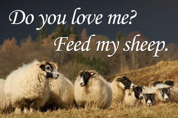 わたしの羊を飼いなさい